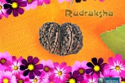 rudrakshm-wallpaper-1024x768-worldastro.us.jpg